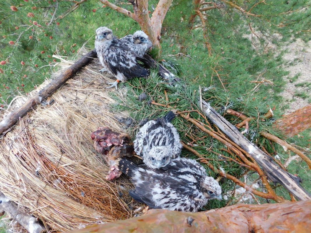 Закрепленное гнездо