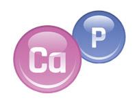 Кальций и фосфор
